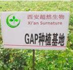 surnature planting base